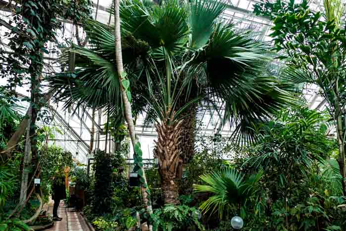 Ботанический сад в Томске
