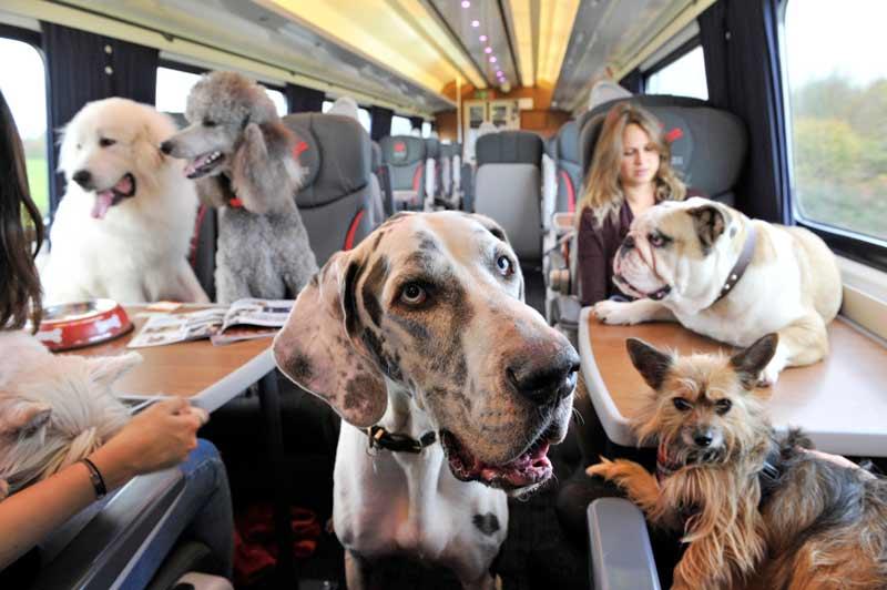 Провоз собак крупной породы в поезде РЖД